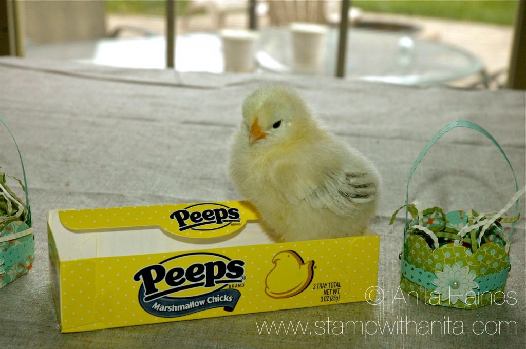 Creative Peeps - www.stampwithanita.com